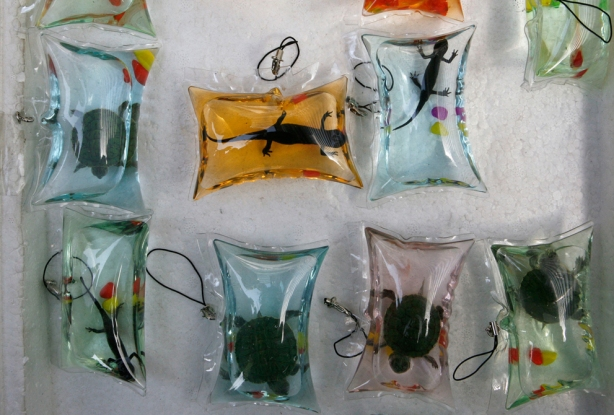 abuso animal,animal abuse,live turtles fish and salamandra live sold as keyrings in sealed plastic bags in china,tartarugas brasileiras vendidas como amuleto da sorte em pequenos chaveiros de plástico nas ruas da china,