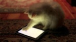 aplicativos ipad android para gatos, apps for cats, tablets para gatos, purina app cats gatos, jogos para gatos ipad, geek games for cats, gato geek