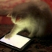 ipad for cats, apps for cats,aplicativos para gatos